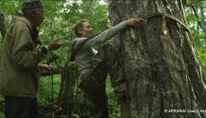 film łowcy miodu