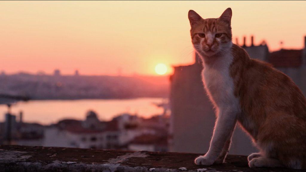 film Kedi sekretne życie kotów