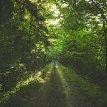 zdjęcie drogi w lesie