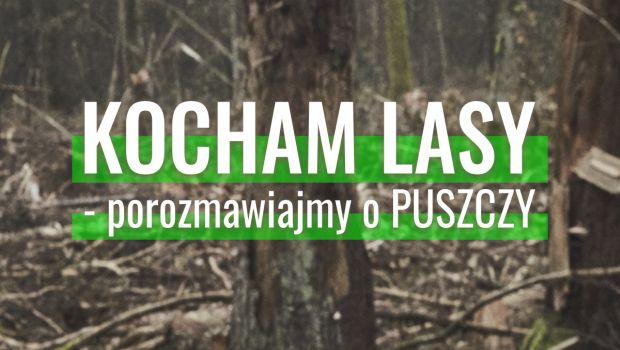 plakat projektu kocham lasy